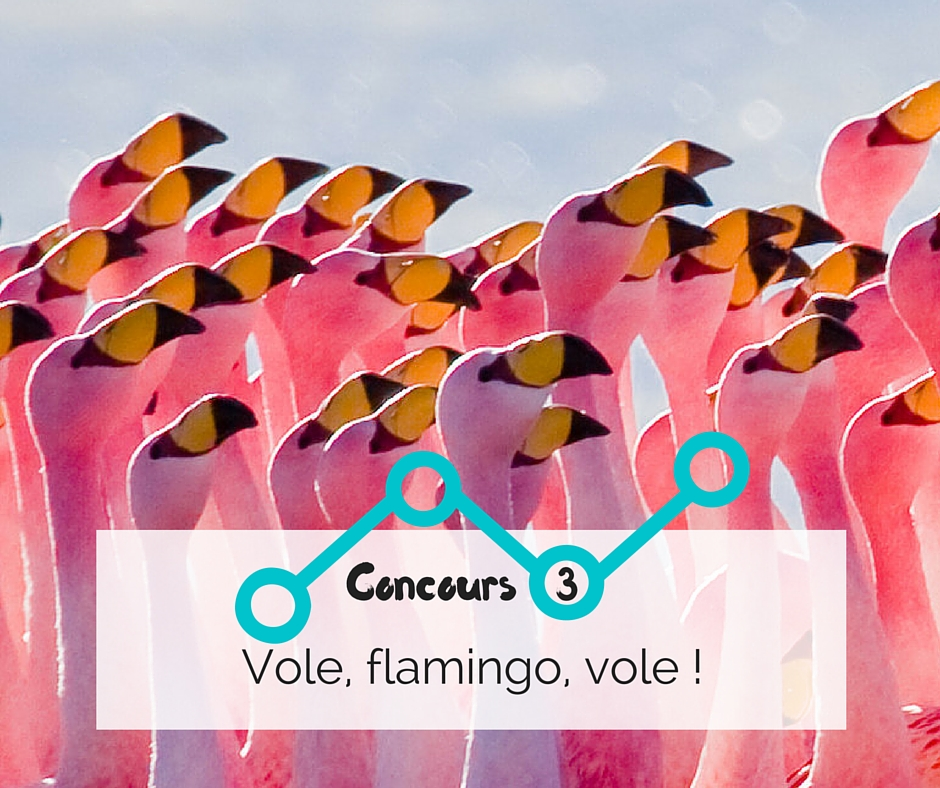 Concours #2 _ Vole flamingo, vole !