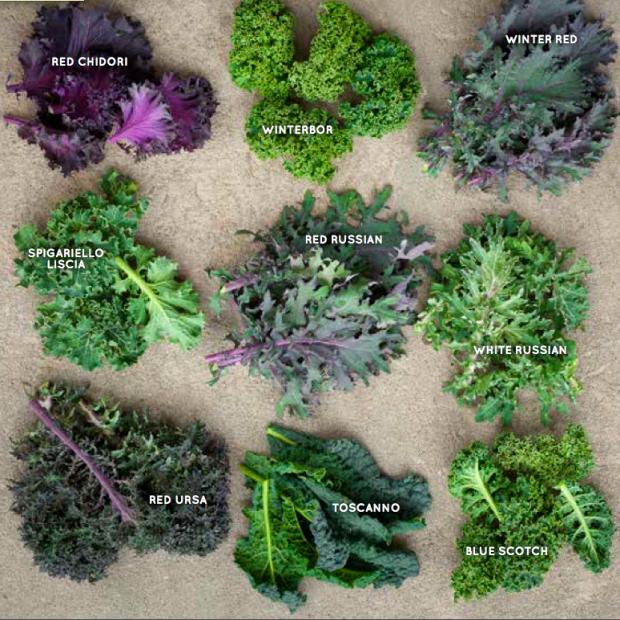 quelles choux kale